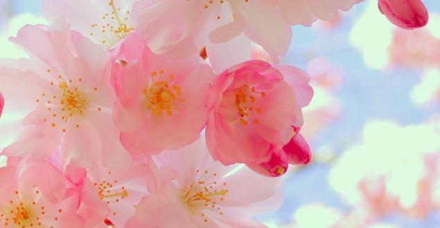 Fleurs-Printemps-feuille-de-chou