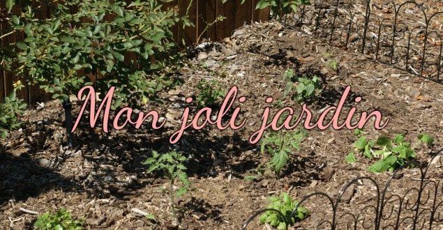 Commencer un joli petit jardin-Feuille de choux