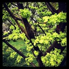 verde_4.jpg
