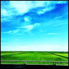 rice-fields-forever.jpg