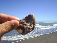 beachcomb12.JPG
