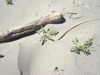 beachcomb7.JPG