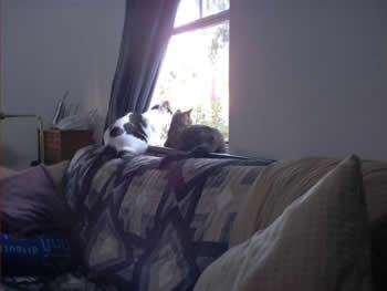 gatos do Gabe