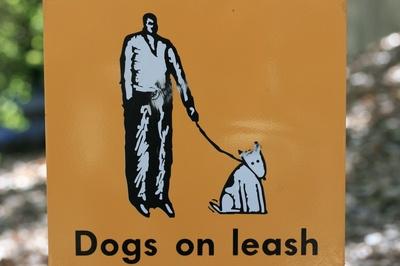 dogsonleash.jpg