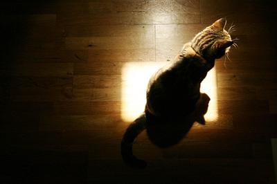 gato_sol_1S.jpg