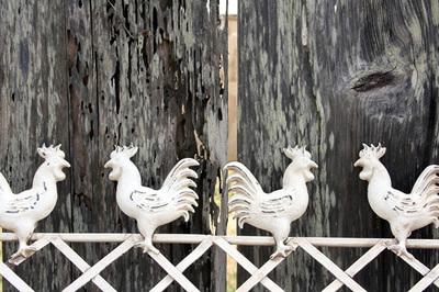 roosters_pescadero.jpg