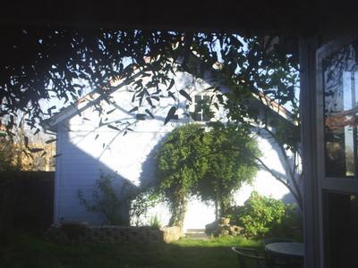 sunnybackyard