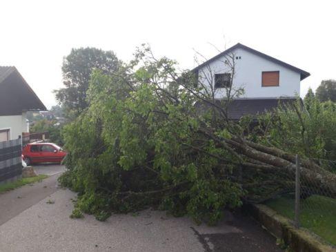 Umgestürzter Baum blockiert Straße