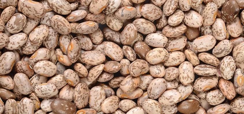 F.Garcia pinto beans