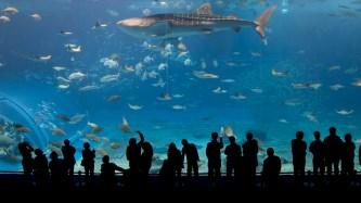 Plus grand bassin du monde et ses requins
