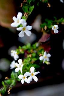 Fleurs de maison
