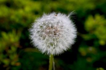 Plante au vent