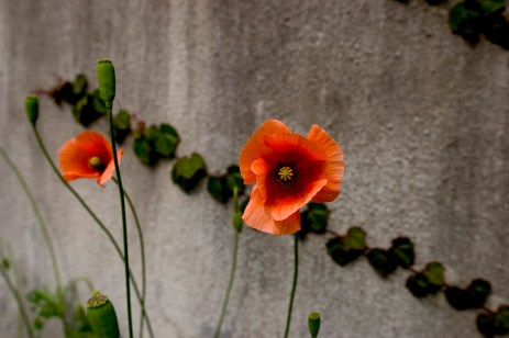 Fleurs de béton