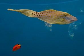 2 poissons dont un plutôt amusant