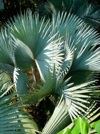 ... et des plantes d'apparence un peu plus aggressive