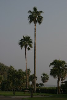 C'est blinde de palmiers, ambiance legerement paradisiaque.