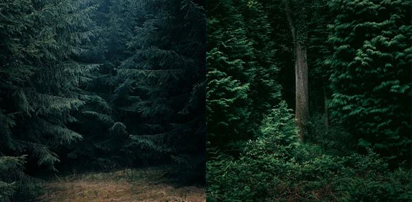 dgc-woodland