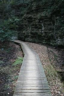 Petit chemin de bois...