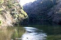 Le lac et sa population de canards et de carpes.