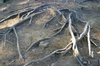 Des racines a eviter habilement.
