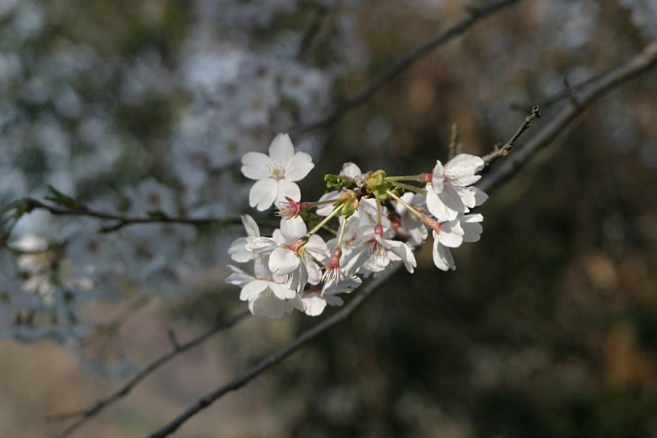 kamakurayama016