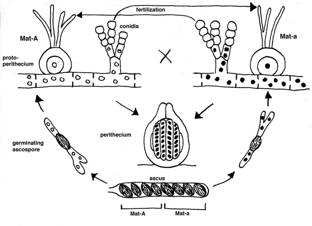 medium resolution of fungi quiz diagram