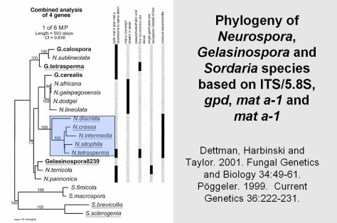Neurospora tree