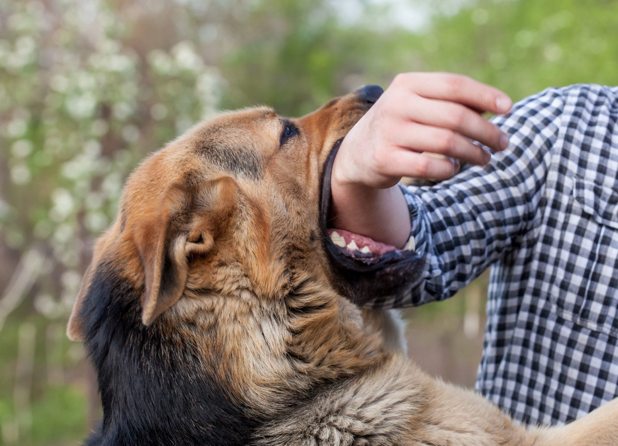 Bitten by a Dog in Texas? What You Should Know |