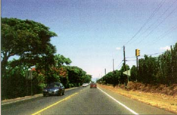 photo of Route 30, Maui, Hawaii, showing trees on the left of the road and utility poles on the right