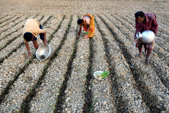 Cultivation in West Bengal, India. Copyrights: Kuntal Kumar / AgriCultures Network