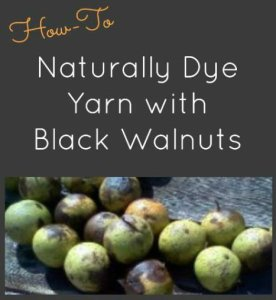 How to Naturally Dye Yarn with Black Walnuts (update)