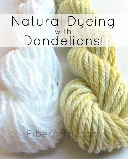 Dyeing with Dandelion Flowers
