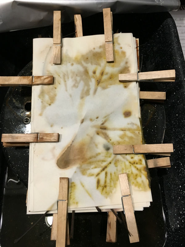 Bundle of eco print papers after steaming