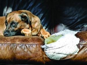 Pet damaged leather furniture
