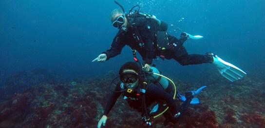 伊豆大島でもカラフルな魚が見られます
