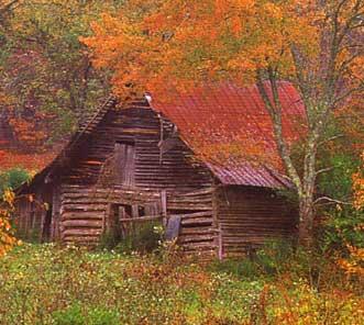 Fall Aspens Wallpaper Barn Equipment Buildings