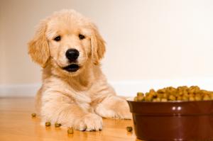 Dog Food Explained