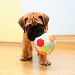 Choosing The Best Puppy Dog Toys