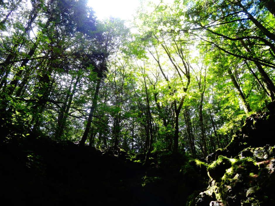 Mt.Fuji Nature Tours ; Night Silent Hiking In Aokigahara Jukai