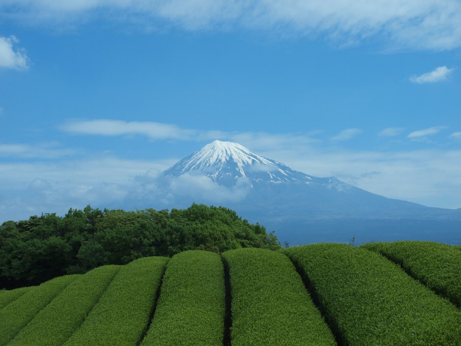 Shizuoka, The Capital of Japanese Tea