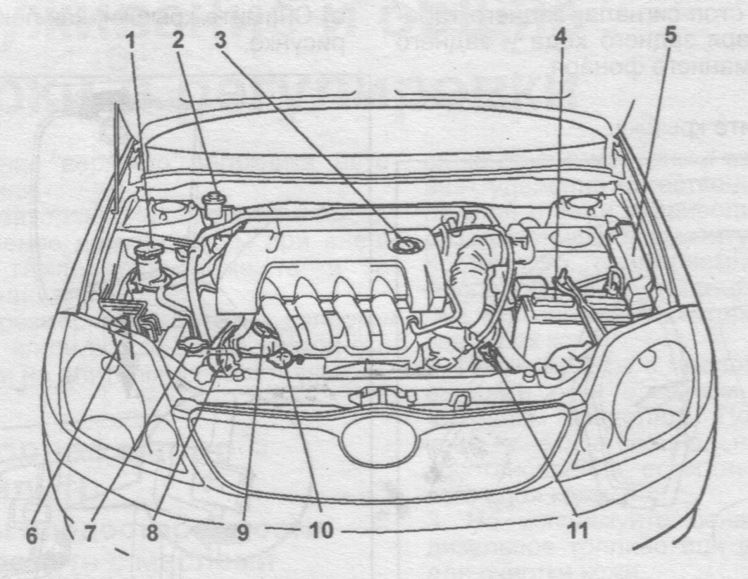Toyota 1nz Fe Engine. Toyota. Auto Wiring Diagram