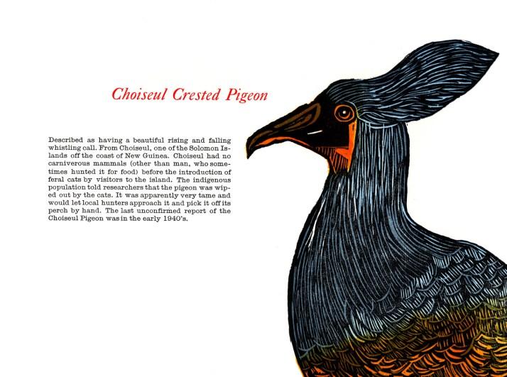 choiseul crested pigeon_spread