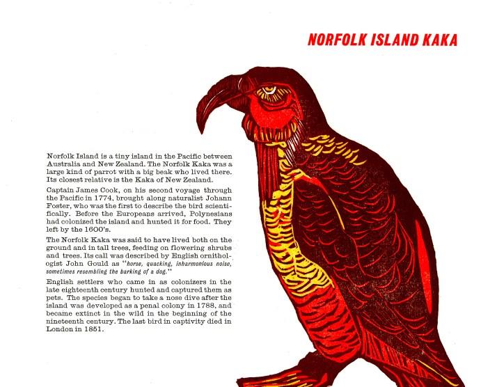 norfolk island kaka