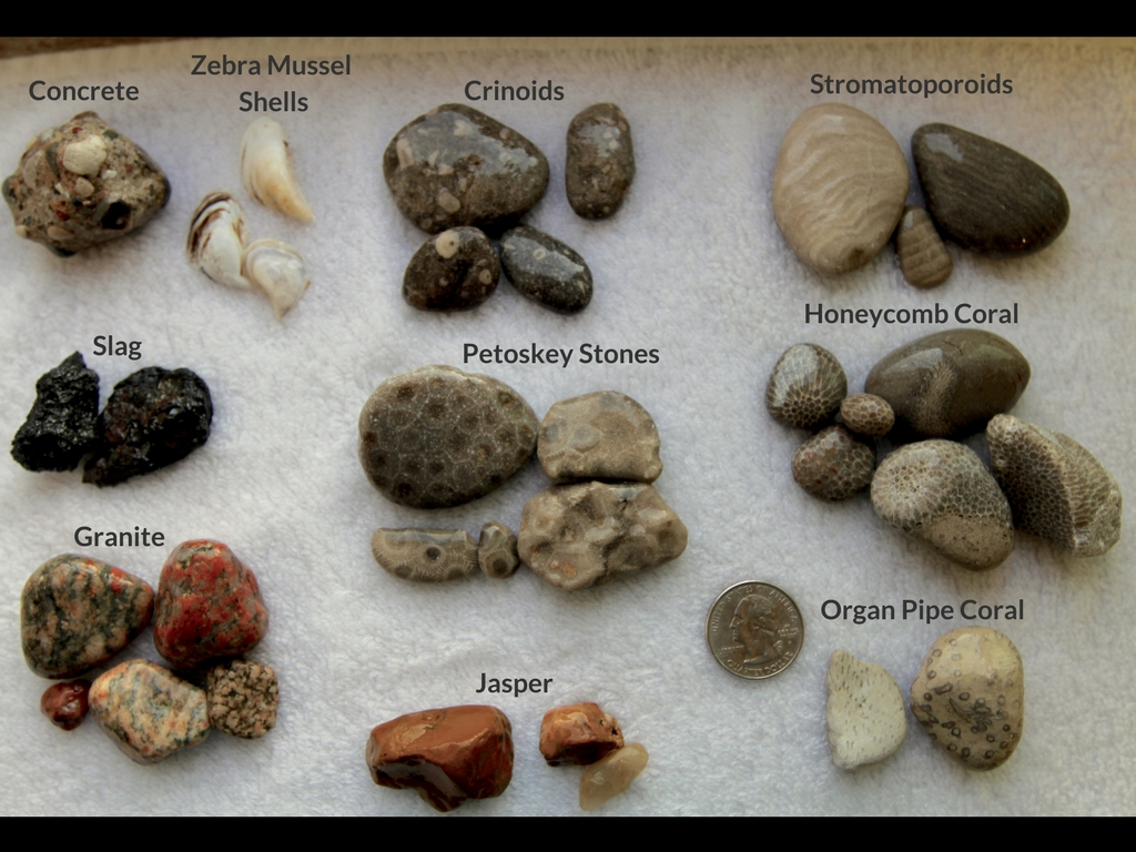 Beachgoers Guide to Lake Michigan Fossils and Rocks  Field Museum