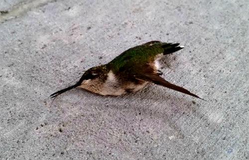 ctyp_stadiumbird2
