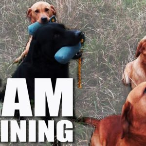 Gundog Summer Boot Camp: Training a Team