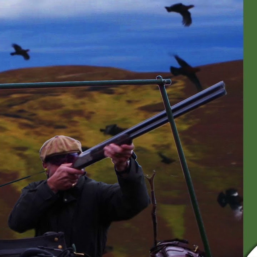 Driven grouse in Scotland
