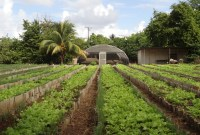 Urban farming and its necessity in Cuba