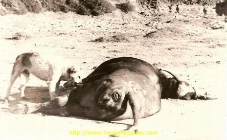 Le casse croute de Milou en Iraq