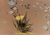 Et une petite fleur dans ce monde de brutes.